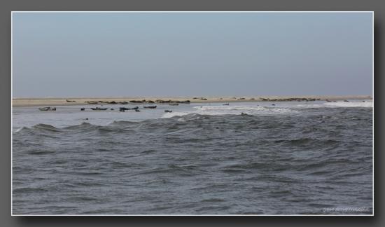 L'île aux phoques a 20 minutes de texel