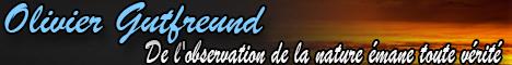 Site Olivier Gutfreund