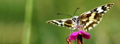 Mutter-Natur-Fotografie Von Manfred Mutter