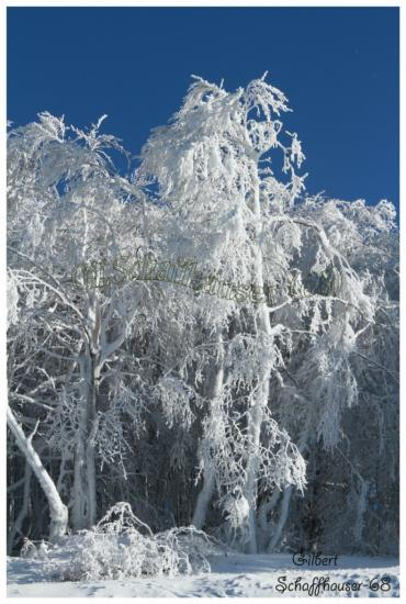 L'hiver le 21.01.2012