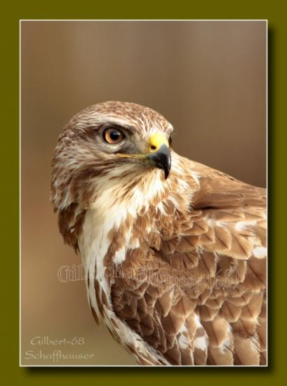 Portrait de buse variable