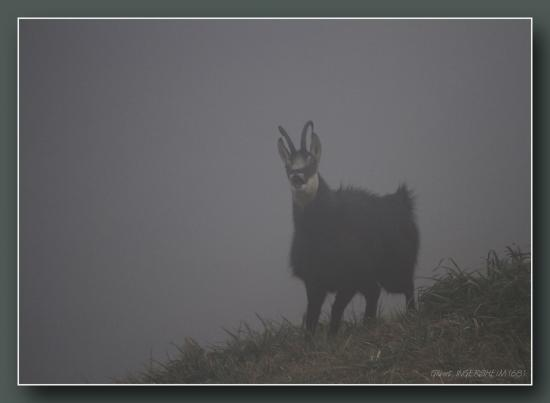 Rut dans le brouillard
